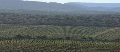 San Miguel strengthens as a global producer